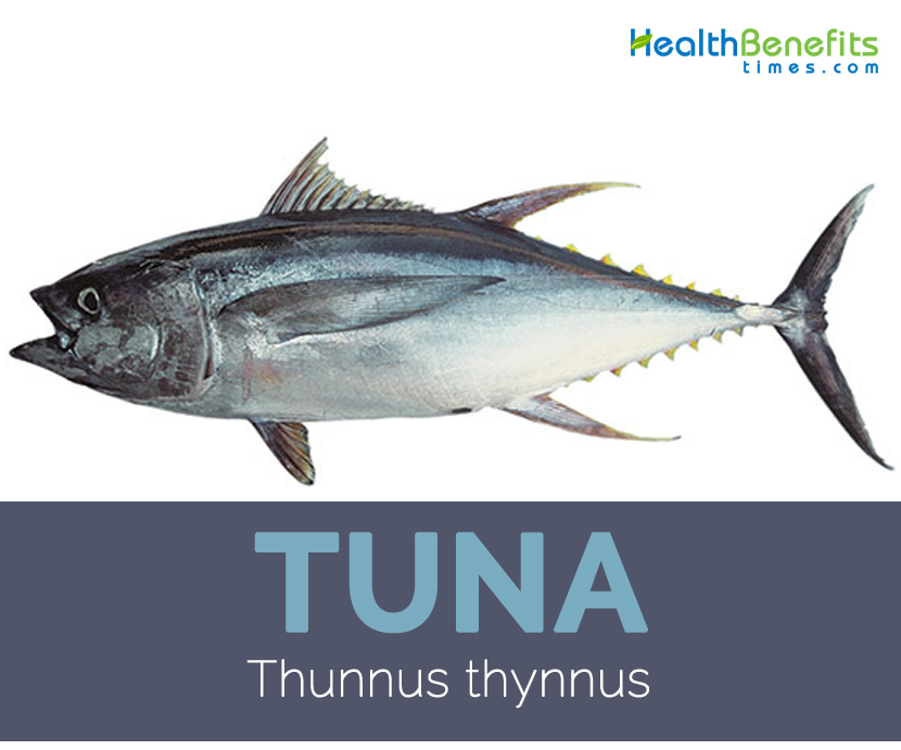 Tuna facts and health benefits