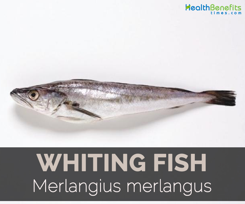 Whiting fish facts health benefits and nutritional value for What is a fish