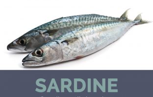 Sardine facts and health benefits
