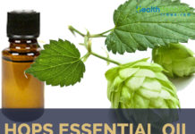 Hops Essential Oil facts and benefits