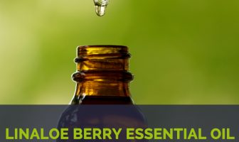 Linaloe berry essential oil facts and health benefits