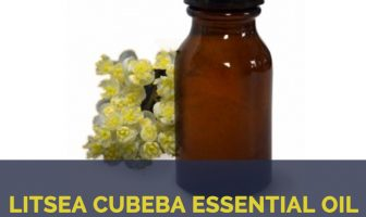 Litsea cubeba essential oil facts and benefits
