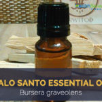 Palo santo essential oil facts and benefits