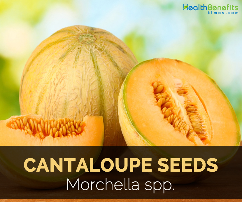 Cantaloupe Seeds Facts And Health Benefits Cantaloupe is the perfect healthy summertime treat. cantaloupe seeds facts and health benefits