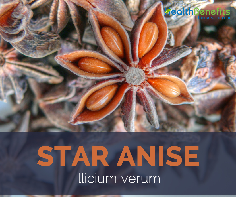 Learn about the potential benefits of Anise including contraindications adverse reactions toxicology pharmacology and historical usage