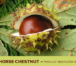 Health-benefits-of-Horse-Chestnut