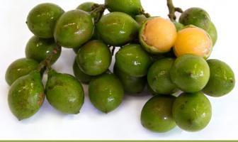 Health-benefits-of-Spanish-Lime