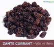Health-benefits-of-Zante-currant