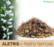 Aletris