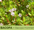 13 Health benefits of Bacopa (Water Hyssop)