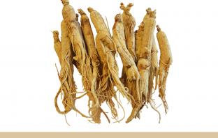 Health benefits of Female Ginseng (dong quai)