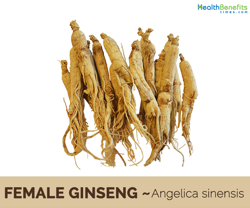 Health benefits of Female Ginseng (dong quai)