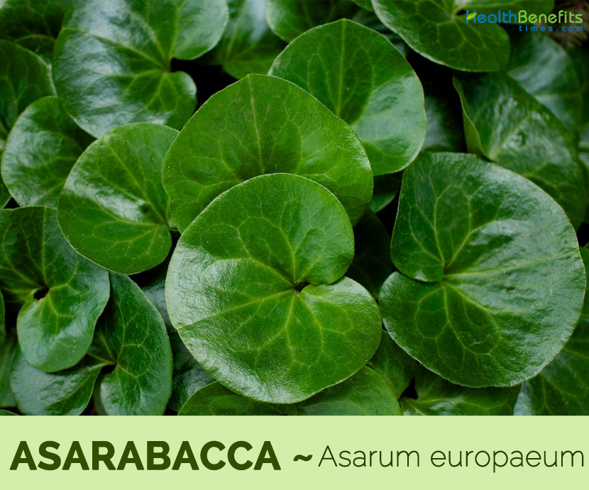 Health benefits of Asarabacca