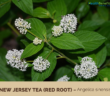 Health benefits of New Jersey Tea (Red Root)