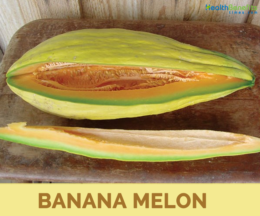 Facts about Banana melon