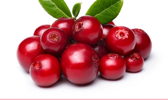Facts and benefits of Lingonberry