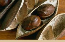 Facts about Calabar Bean