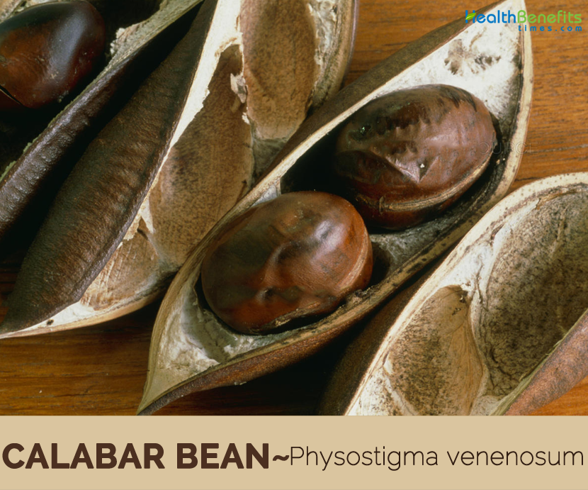 Facts about Calabar Bean