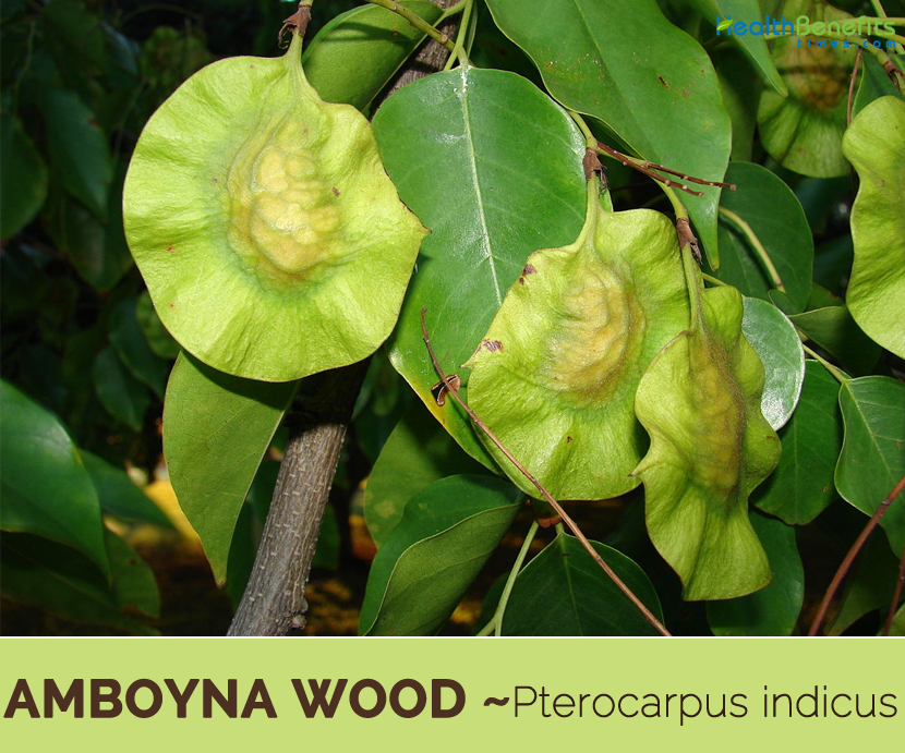 Facts about Amboyna wood