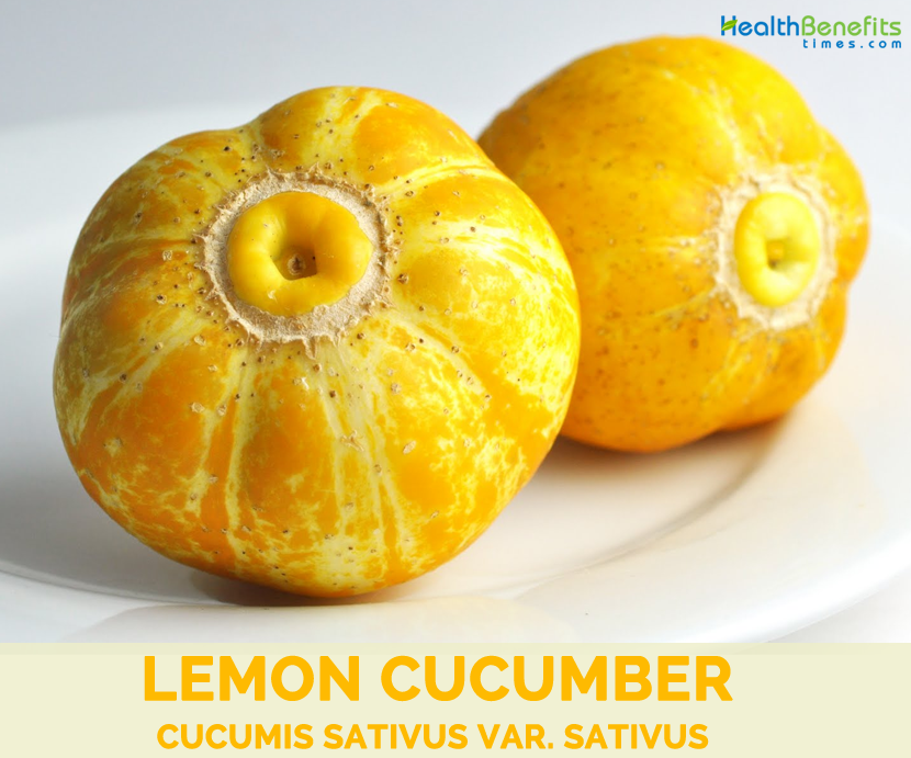 Facts-about-Lemon-Cucumber