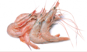Facts and benefits of Prawn