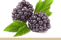 Black Raspberry facts and benefits