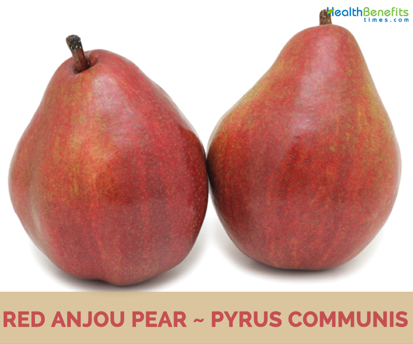 Anjou Pear Pictures