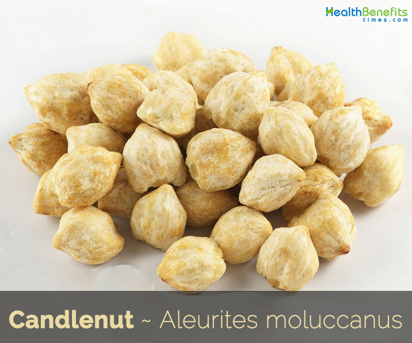Candlenut benefits and uses