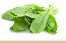 Sorrel facts and health benefits