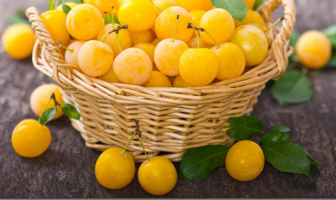 Wild Plum: Health Benefits and Nutritional Facts