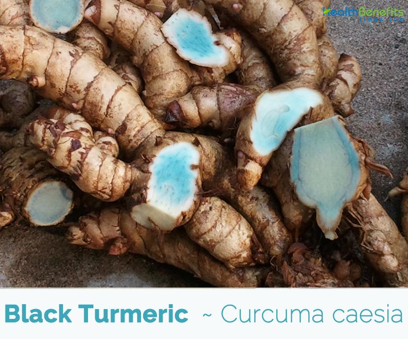 Black Turmeric medicinal benefits