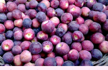 Falsa Fruit facts and benefits