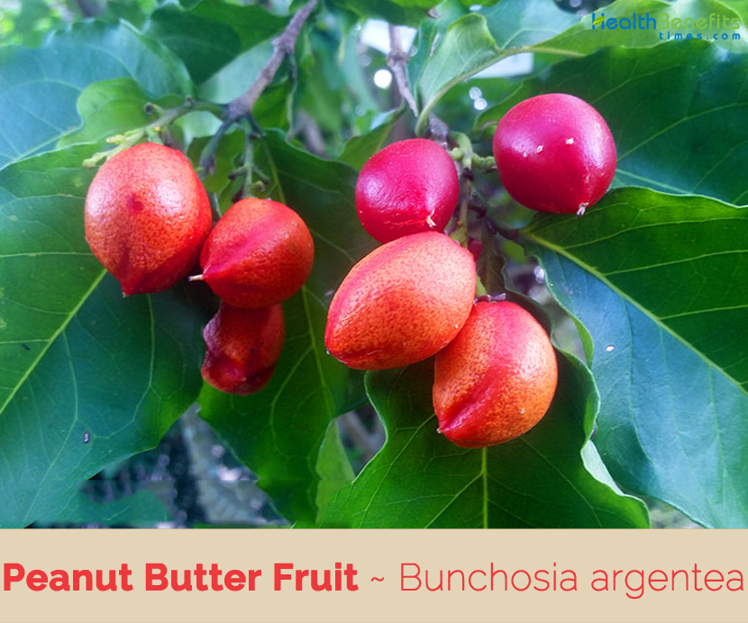 Know about Peanut Butter Fruit