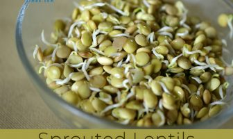 Sprouted Lentils