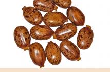 Castor Beans health benefits