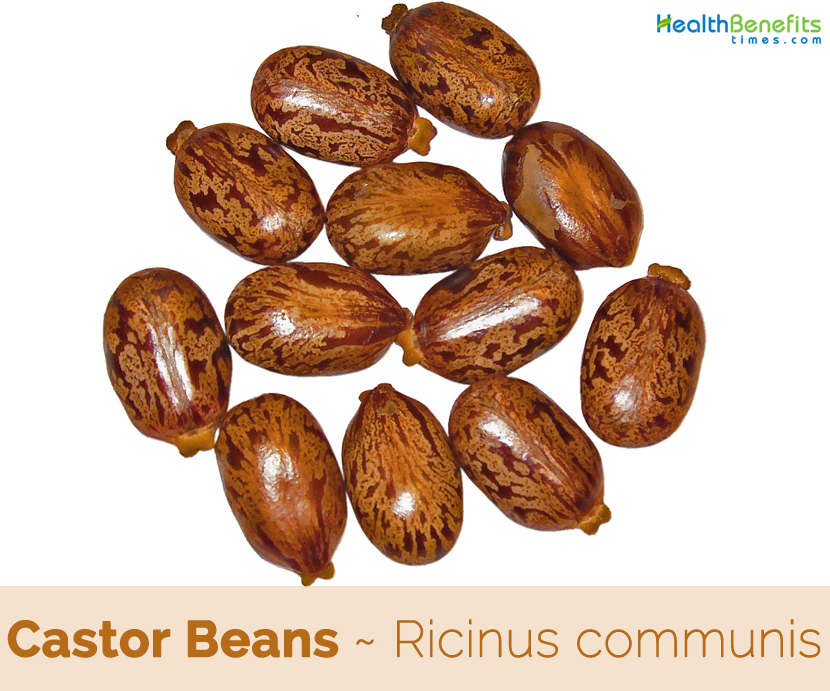 Castor Beans health benefits