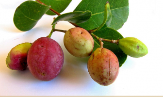 Cocoplum benefits and uses