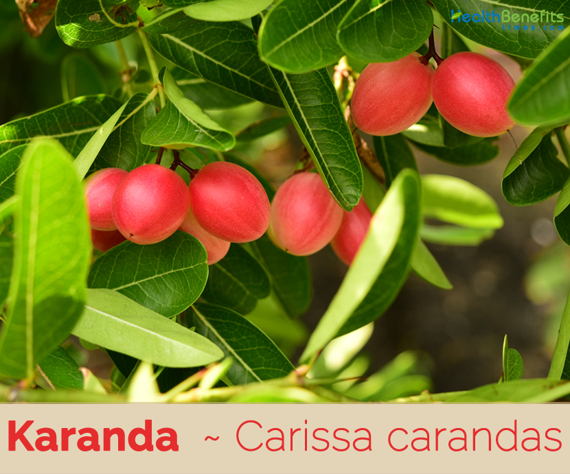 Karanda health benefits