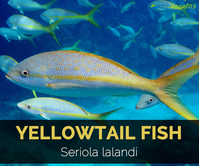 Yellowtail Fish Facts and Nutritional Value