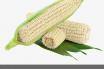 White Corn nutrition and uses