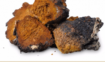 Chaga mushroom benefits and uses