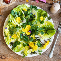 Egg salad with lungwort