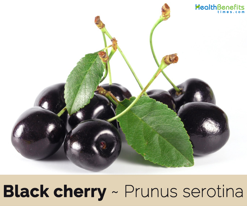 Health benefits of Black cherry