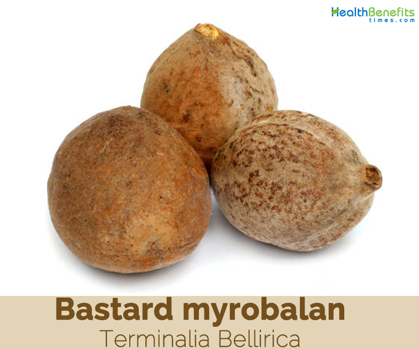 Health benefits of Bastard Myrobalan (Baheda)