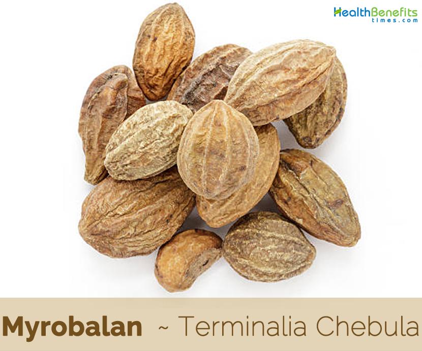 Health-benefits-of-Myrobalan