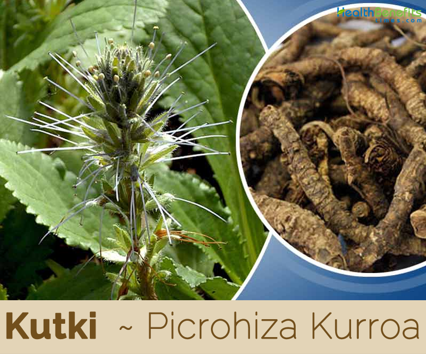 Health-benefits-of-Kutki