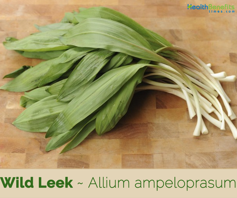 Health-benefits-of-Wild-Leek