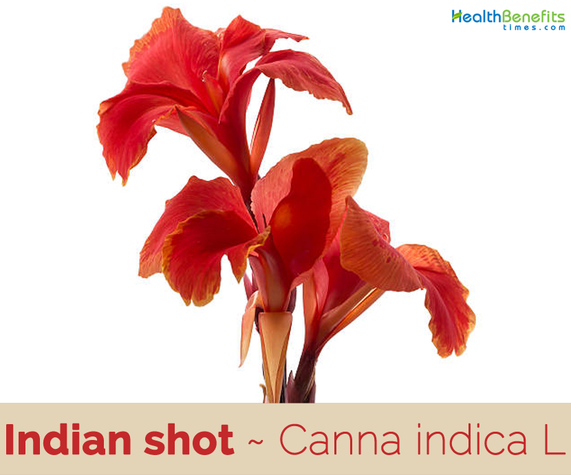 Facts about Indian Shot