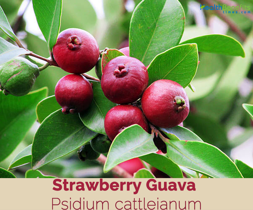 Health benefits of Strawberry Guava