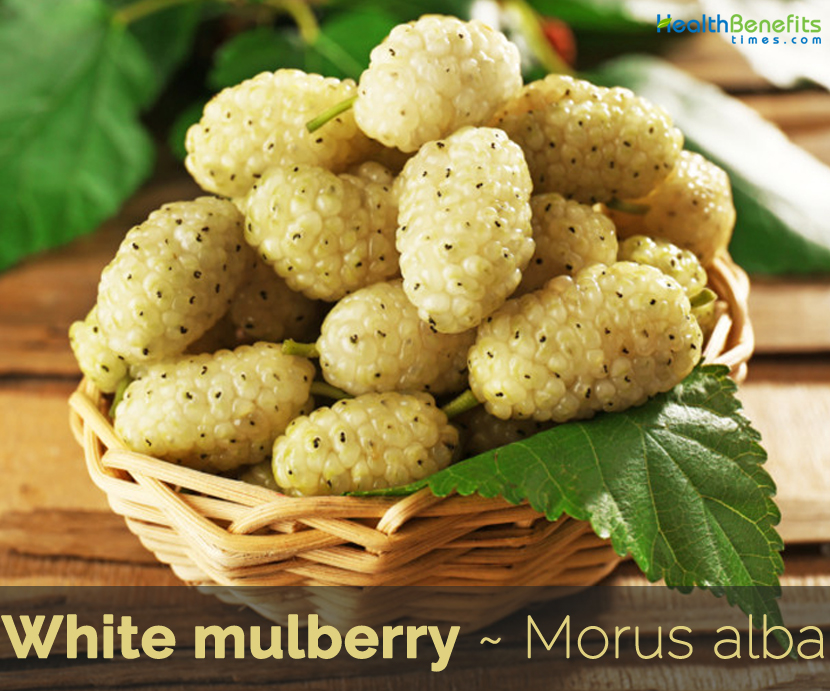 Health benefits of White Mulberry